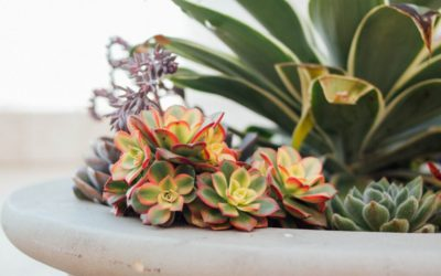 The Benefits of Having REAL House Plants