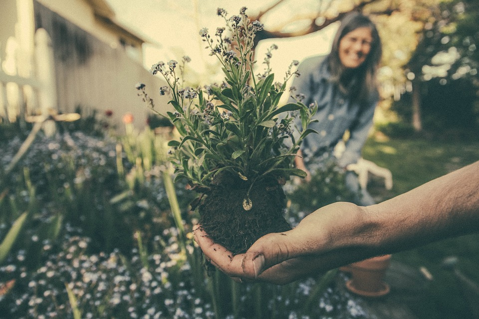 How to Go Green in Your Franklin Home's Garden
